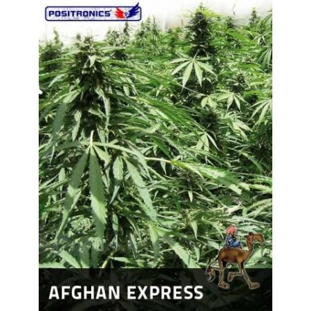 Afghan Express Auto Positronics Semillas