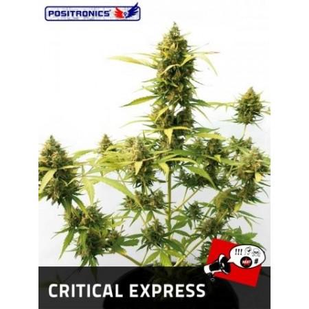 Critical Express Auto Positronics
