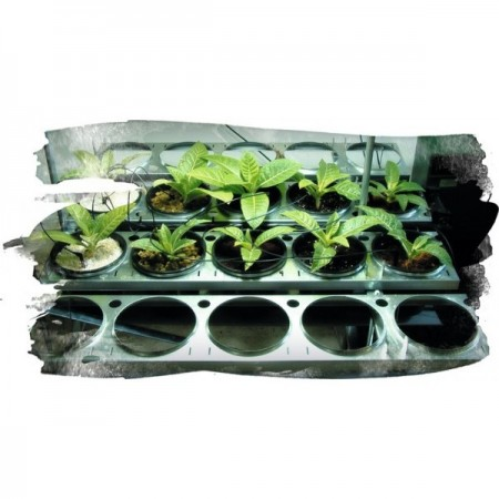 Sistema de cultivo IGS. Sistema de cultivo