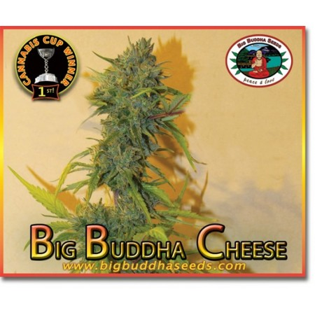 Big Buddha Cheese Big Buddha