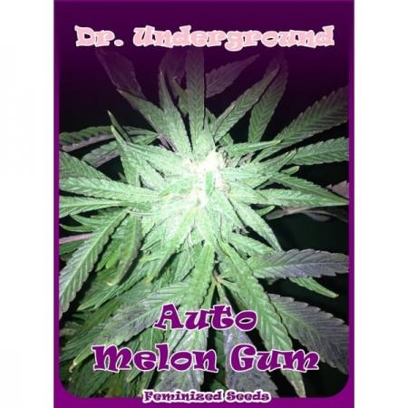 Melon Gum auto. Dr. Underground