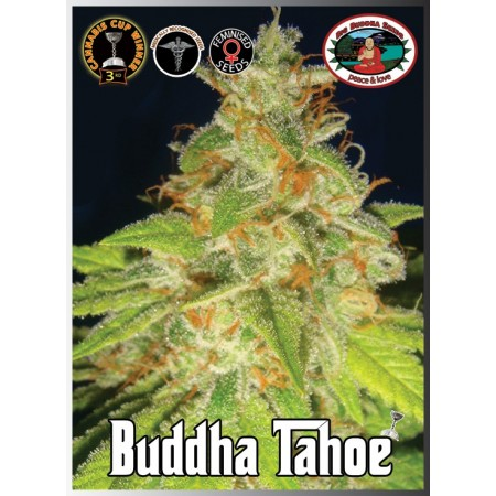 Buddha Tahoe Big Buddha