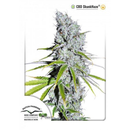 CBD Skunkhaze Dutch Passion