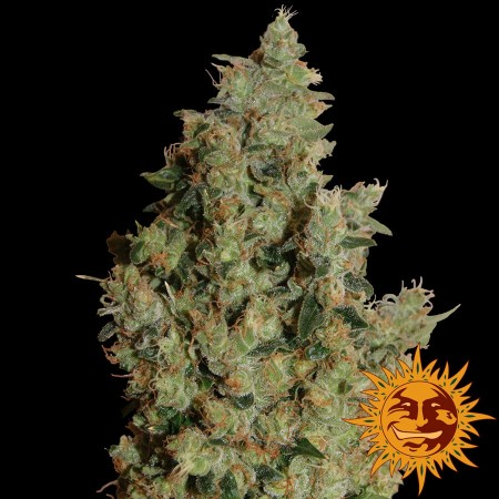 Tangerine Dream Barney´s Farm