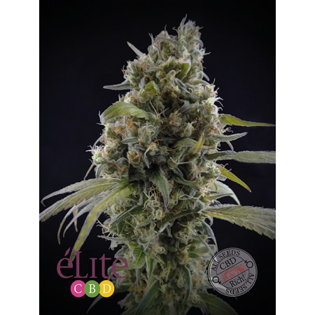 Solodiol Elite seeds