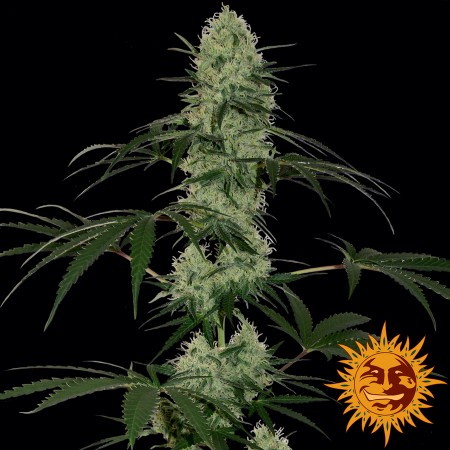 Tangerine Dream Auto Barney´s Farm