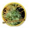 Mr. Kritical Mass Mr. Hide