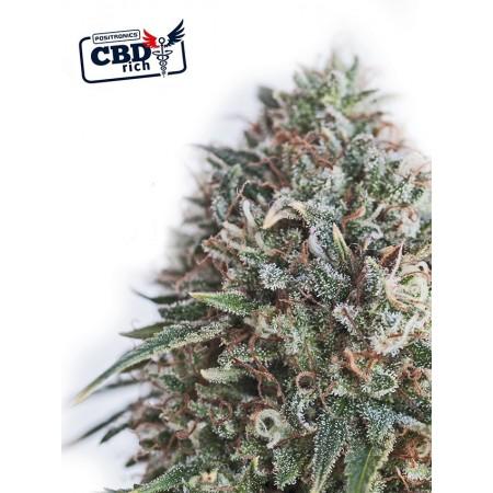 CBD+ Critical 47 Positronics