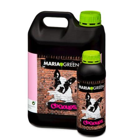 Cogollos Maria Green
