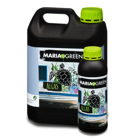 Algas Maria Green