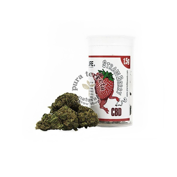 Flores CBD Strawberry Plant of Life
