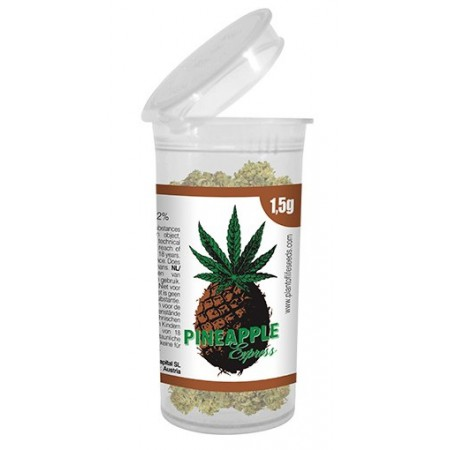 Flores CBD Pineapple Express Plant of Life