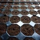 Propagación de semillas, esquejes-clones